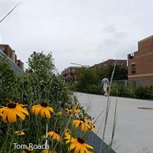 Bloomingdale Trail | Tom Roach
