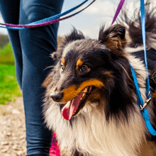 Leashed dog on trail