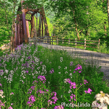 Flowers along the Pine Creek Rail-Trail | Photo by Linda Stager